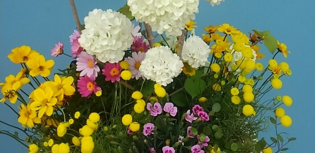 FLOWERS 【2017.5月】